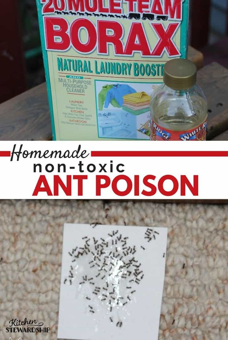 How to Make Non-Toxic Homemade Ant Poison. Got little ants in the kitchen? This mostly natural, non-toxic homemade ant poison is your new best friend. Kill those sugar ants without hurting your family, and it only takes 45 seconds to put together. For real.