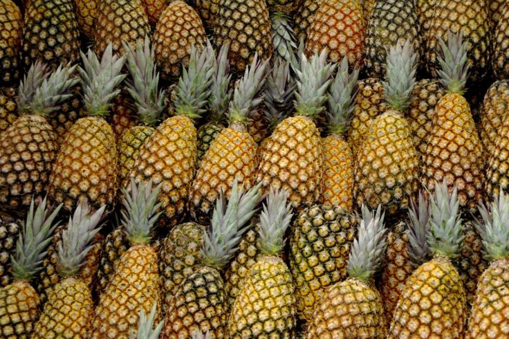 Pineapple: The Wonder Fruit | A Moment of Science - Indiana Public Media