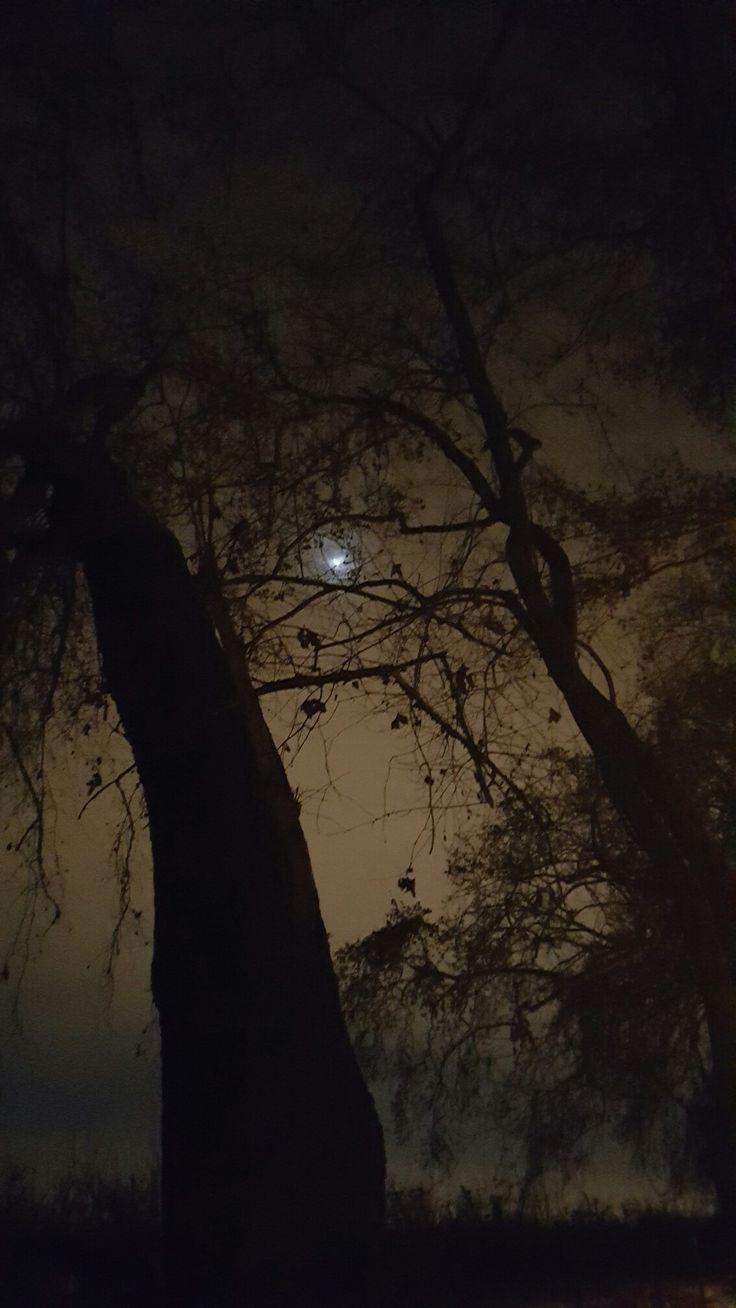 Noche en pirque