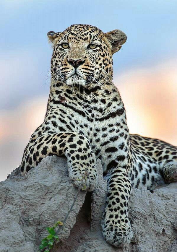 A Natureza E Os Animais: Gatos Selvagens.