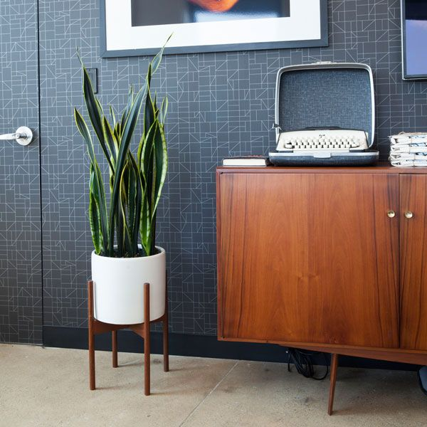 Wonderful The Case Study Cylinder With Snake Plant