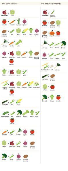 guide de jardinage pour d butants jardin jardines mantenimiento de jardines et plantas jardin. Black Bedroom Furniture Sets. Home Design Ideas