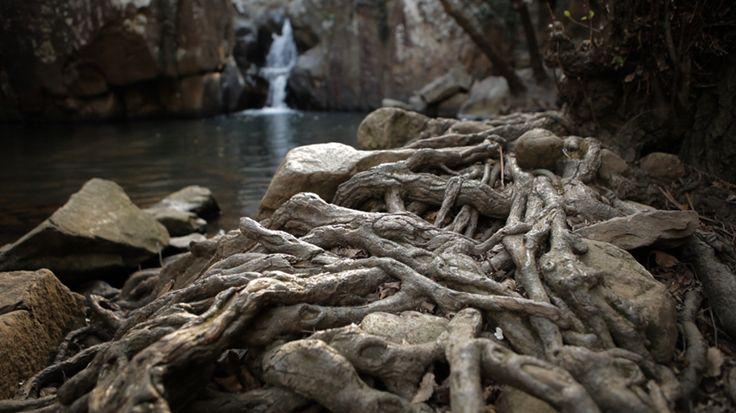 """Parque Natural de los Alcornocales en Los Barrios (Cádiz-Spain). Frame of the documentary short film """"El Dibujo del Tiempo"""" produced by Azhar Media, audiovisual production company (Seville, Andalusian, Spain)  http://eldibujodeltiempo.wordpress.com/"""