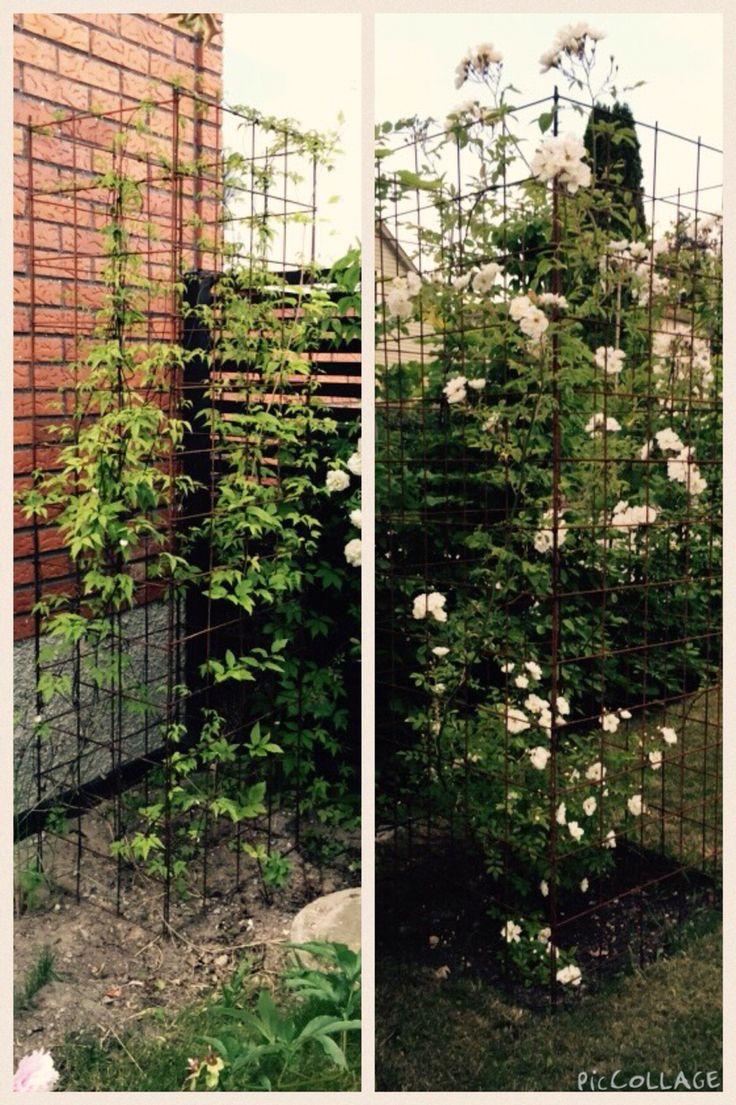 """Växttorn skapade av armeringsjärn. Gillar när det blir lite """"höjd"""" i trädgården."""