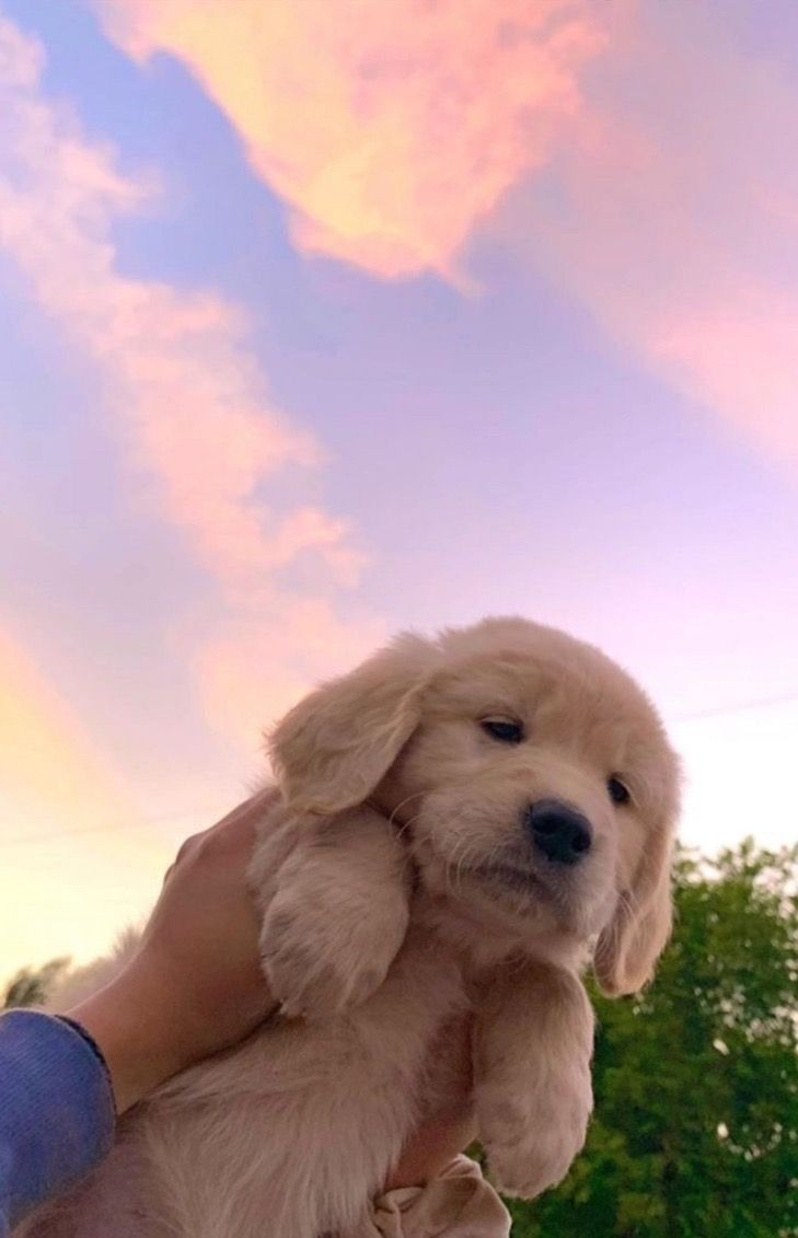 Pinterest Vivipaigee In 2020 Cute Puppy Wallpaper Cute Dog Wallpaper Cute Animals