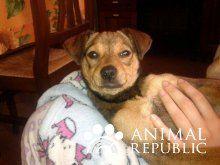 animalrepublic.it | Adozioni, annunci, news