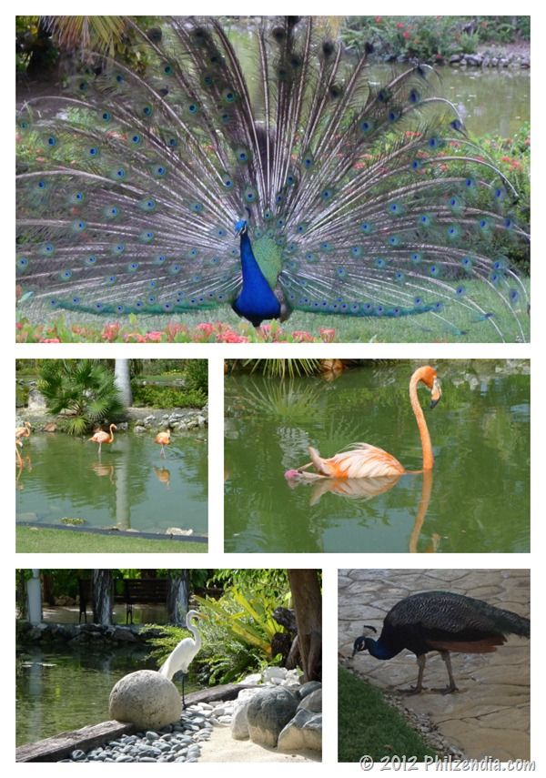 417 best images about heavenly places on pinterest more for Dominican republic vacation ideas