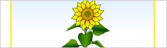 Sunflower Life Cycle and Growth Teaching Resources - SparkleBox