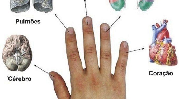 Os dedos estão conectados com os órgãos: método japonês para curar em 5 minutos! | Cura pela Natureza