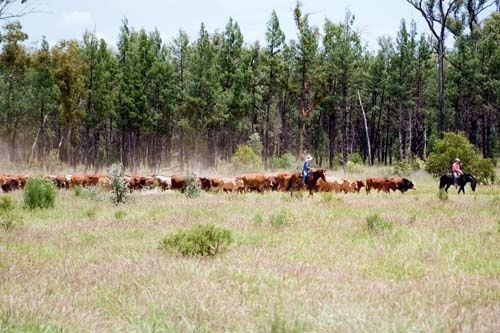 An evolving cattle enterprise in south-western Queensland ensures the Turner family continue a six-generation tradition In the heartland.