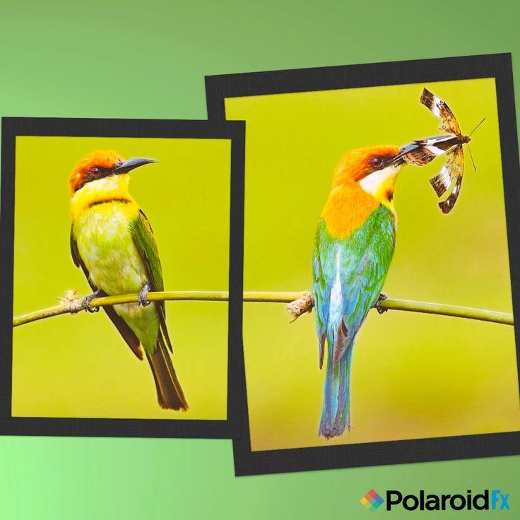how to make polaroid effect