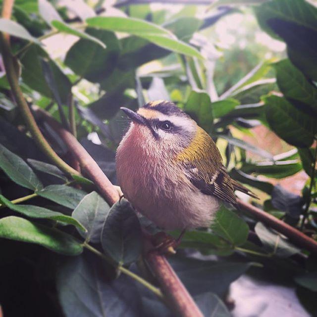 Nuovi vicini di casa❤️🐣🍃 #micro #bird #puppy #love #newneighbour…