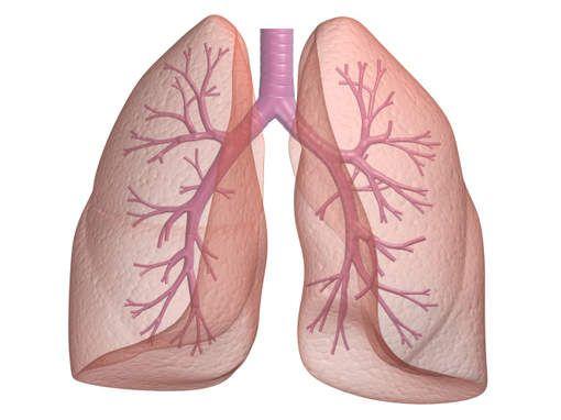 longen - Google zoeken