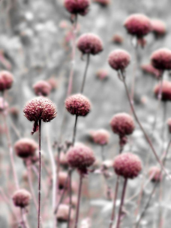 This photo shows color because the pink stands out from the grey and creates a focal point.