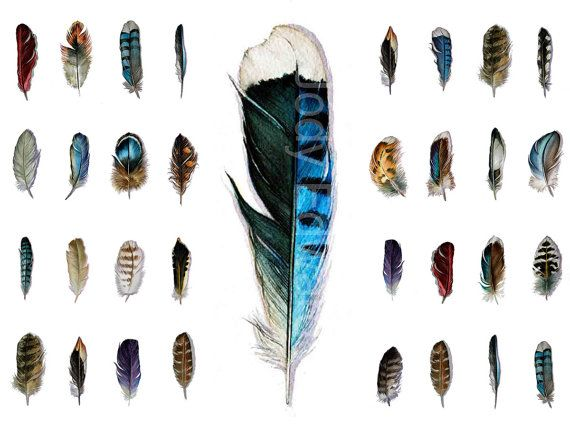 Feather Watercolors 16 Original Feather Studies  A by jodyvanB, $660.00