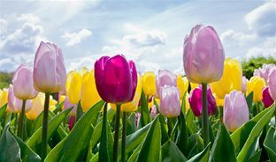 When does spring start - the difference between the meteorological and astronomical seasons.