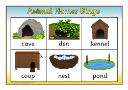 Animal homes bingo (SB7980) - SparkleBox
