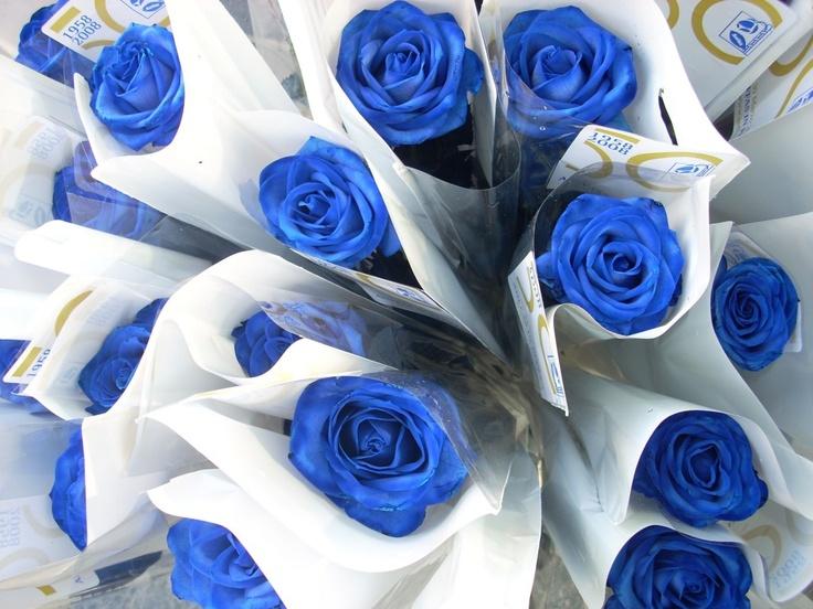rose ... blu