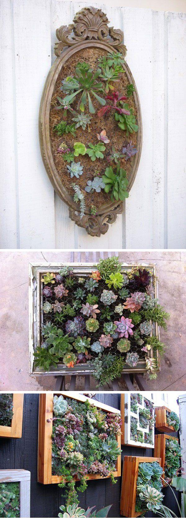 plantas y lofres enmarcadas