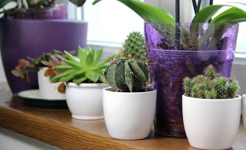 6 hyvää syytä hankkia lisää huonekasveja