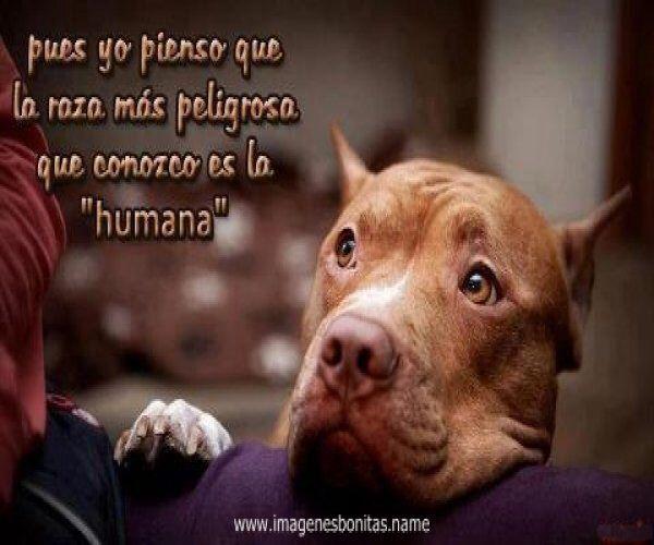 Image from http://imagenesgratis.info/wp-content/uploads/2014/02/imagenes_de_perros_pitbull.jpg.