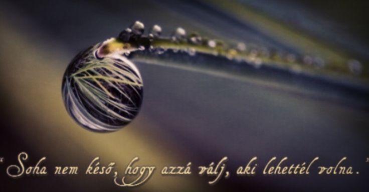 """""""Soha nem késő, hogy azzá válj, aki lehettél volna."""" Kövess bennünket Facebookon: https://facebook.com/magyarzeneikultura  #magyarzeneikultura #utad #celod #finish #cel #zene #dal #idezet #quote #hungary #hungarian #magyar #magyarok #zenesz #zenesz #tehetseg #tehetsegek @magyarzeneikultura #vihar #instagram #instaphoto #megosztas #share #shareplease #helpme #helpmeplease #followme #followmeplease #foundation #alapitvany"""