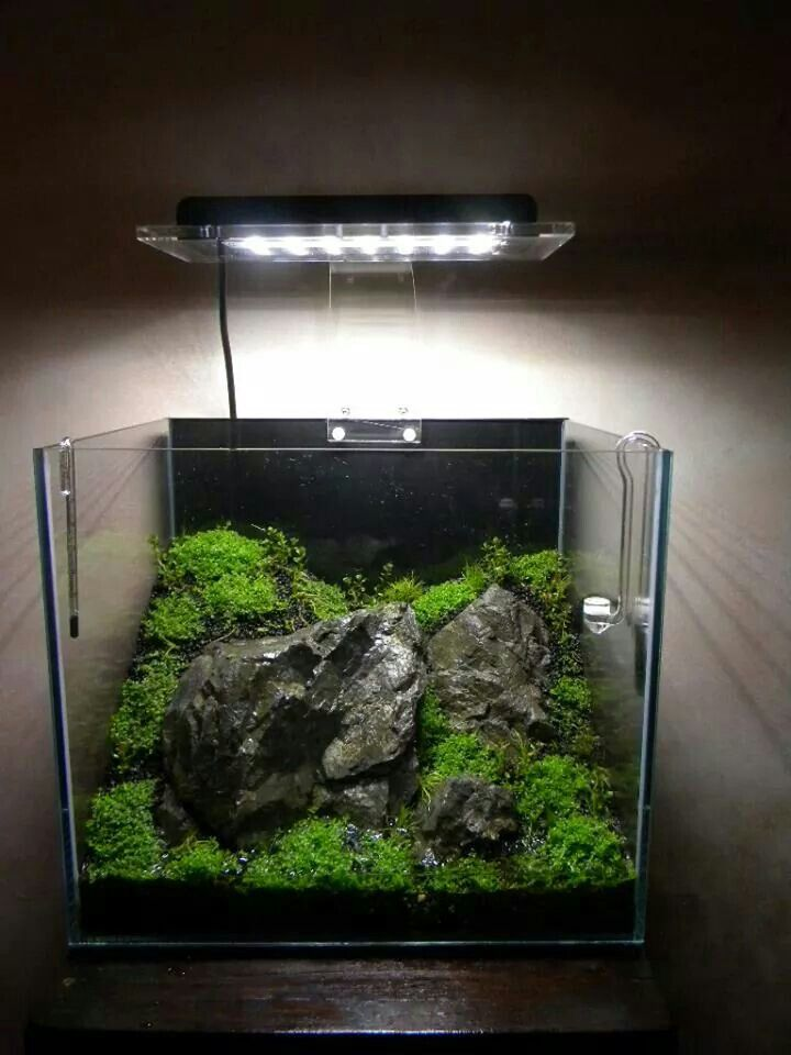 112 best cube aquascape ideas images on pinterest for Aquarium nano cube