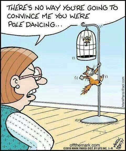 Funny Cat Cartoon Meme : Cat humor pole dancing cats funny quotes