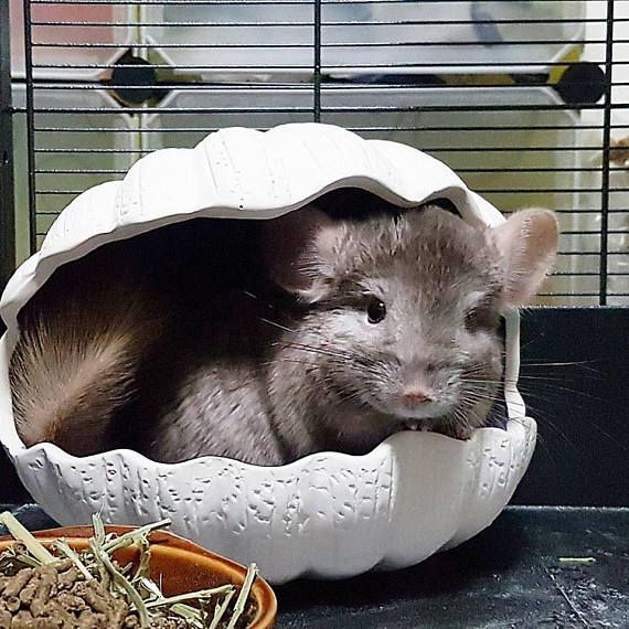 Your Place To Buy And Sell All Things Handmade Cute Animals Chinchilla Pet Hamsters As Pets