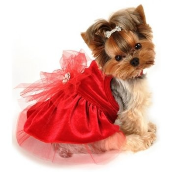 SKU: 2010 Red Holiday Dog Dress  2010 Red Holiday Dog Dress. Beautiful special occasion dress in luxurious red velvet. Layers of fancy tulle and jeweled brooch will make your pet the belle of the ball! Made of soft stretch velvet and tulle. XXS 1-2 lb, XS 3-5 lb, Small 6-8 lb, Medium 9-18 lb.  Price: $38.00
