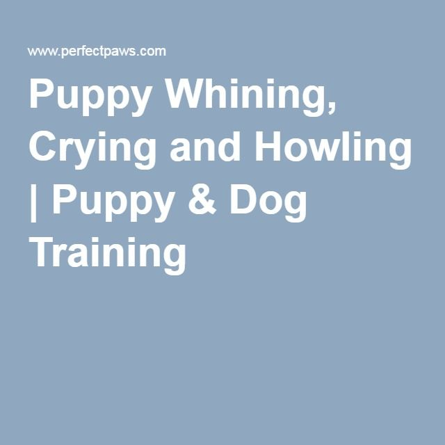 Stop Dog Whining In Kennel
