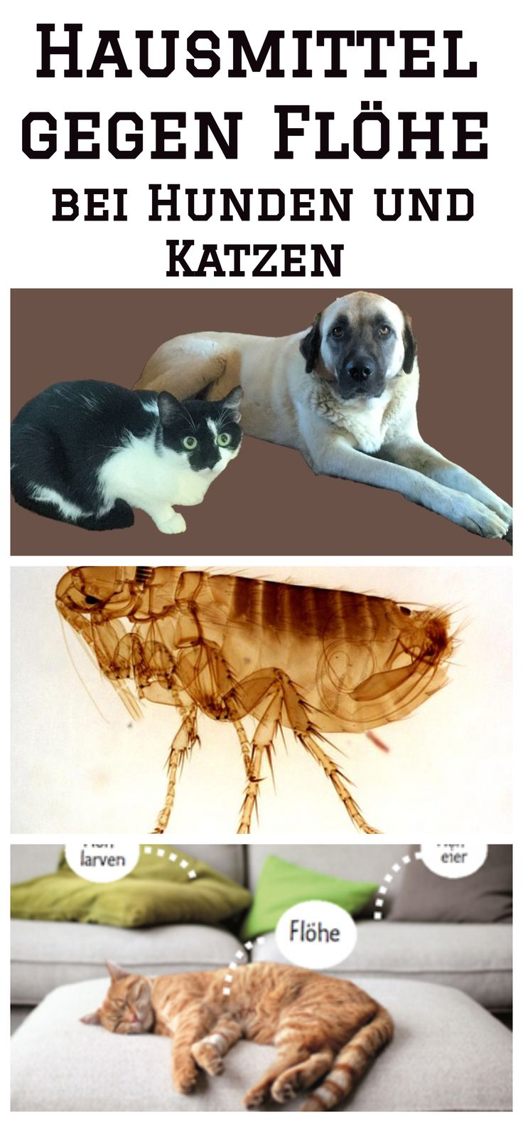 hausmittel gegen fl he bei hunden und katzen hausmittel. Black Bedroom Furniture Sets. Home Design Ideas