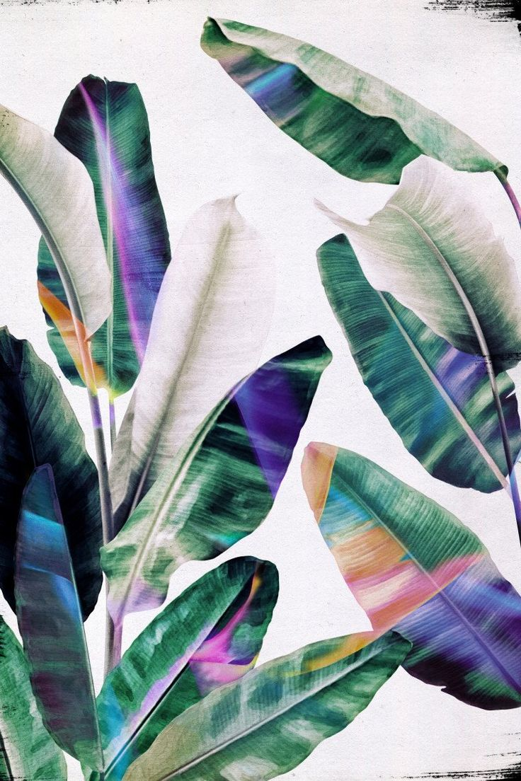 TROPICAL #1 by LEEMO
