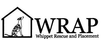 Whippet Rescue and Placement ... I spend far too much time on this site daydreaming of a sister/brother for D