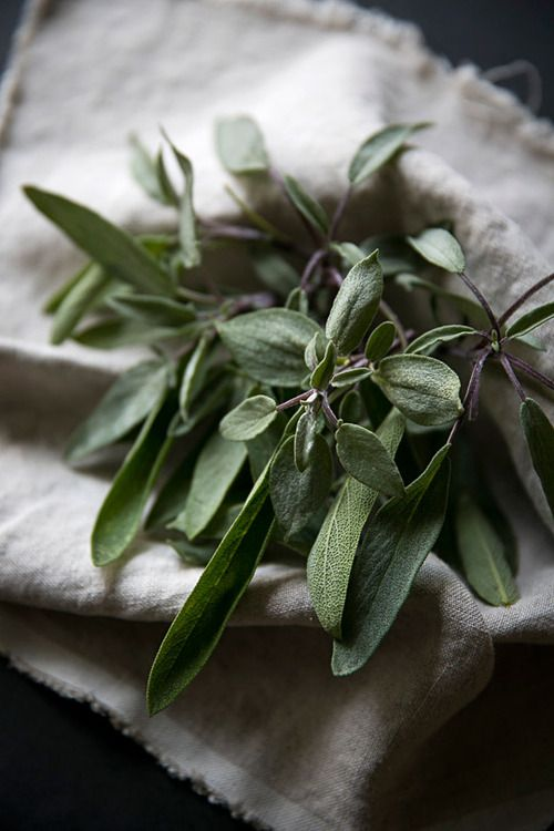 Sage is a herb native to the Mediterranean. It has been revered for centuries for its medicinal and culinary uses. It is known for its natural anti-inflammatory, anti-septic and anti-bacteria properties and can help soothe indigestion. It is also interesting to note that sage has a long history of being used to treat memory loss and Alzheimer's disease.