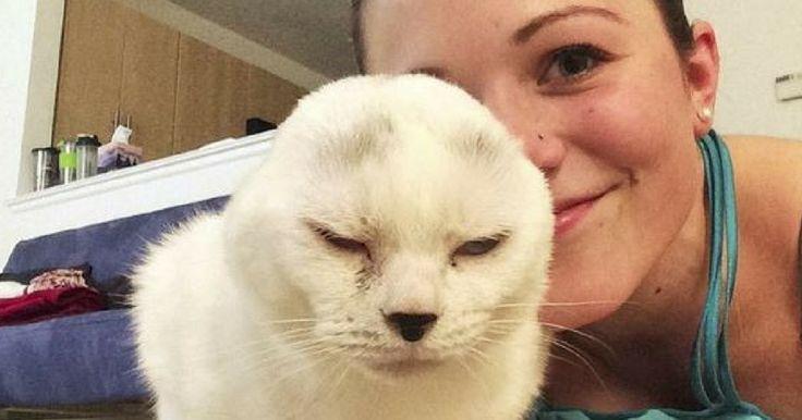 Un vieux chat sans oreilles attendait des maîtres dans un refuge, mais personne n'y prêtait attention… jusqu'au jour où une jeune femme a posé son regard sur lui.