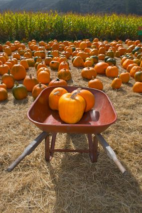 looking forward to a trip to the pumpkin patch!