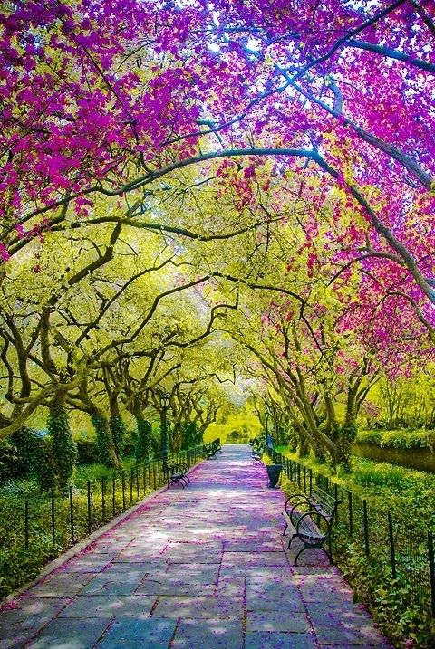 New Wonderful Photos: Purple and Green Trees