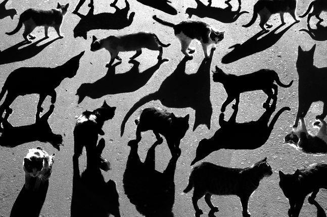 Тени отбрасывают котов
