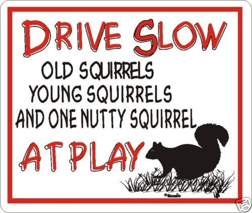 Drive Slow Nutty Squirrel Novelty Sign  | eBay
