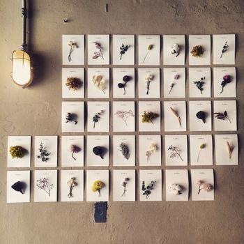 小さな紙にドライフラワーを貼り付けて、植物図鑑のように。 アートのようで素敵ですね。