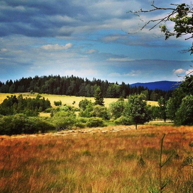 Safari w Sudetach _ tylko owce zamiast antylop  #upał #hot #wakacje #summer #holiday #góry #mountain