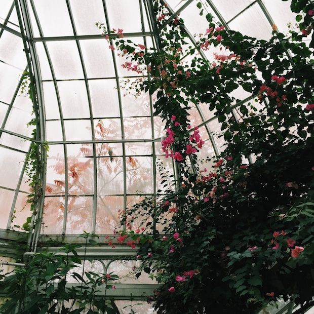 http://montreall.com/exploring-montreal-westmount-greenhouse/