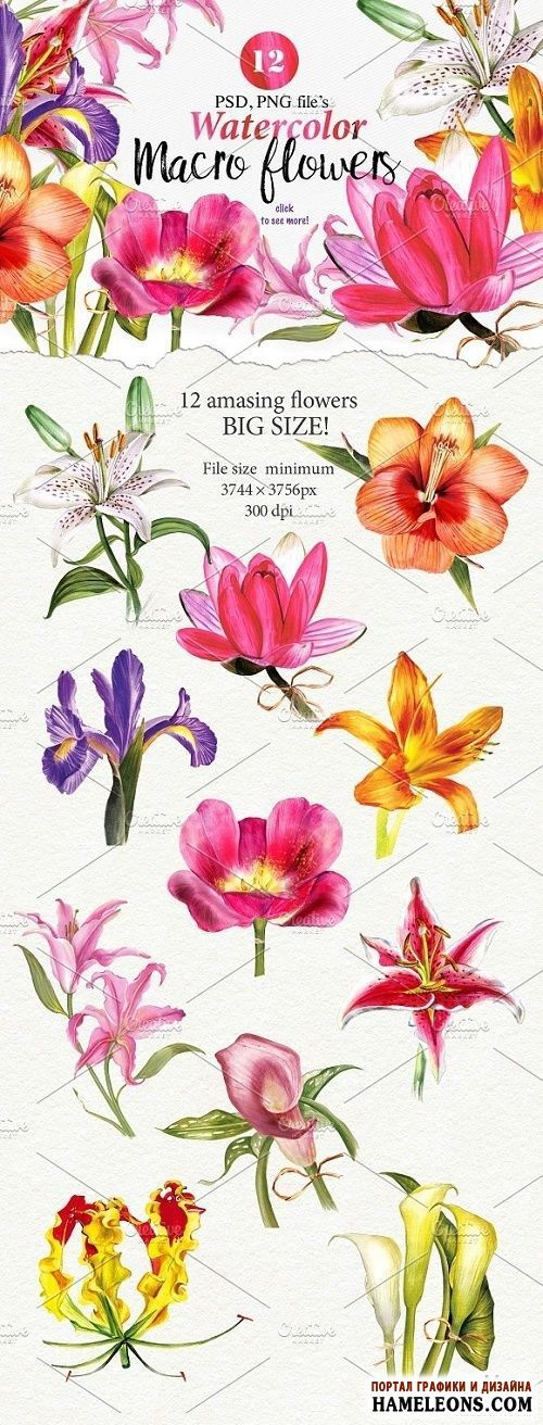 Яркие акварельные цветы - клипарт без фона | Macro flowers collection