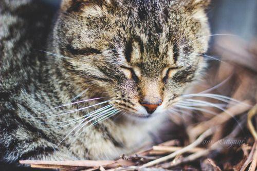 { Anna Słapek - fotografia } #cat #kot