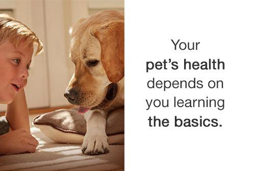 How Shelters Prepare Your Dog for Adoption  https://blog.shareyourpet.co.uk/how-shelters-prepare-your-dog-for-adoption/?utm_source=SocialAutoPoster&utm_medium=Social&utm_campaign=Pinterest