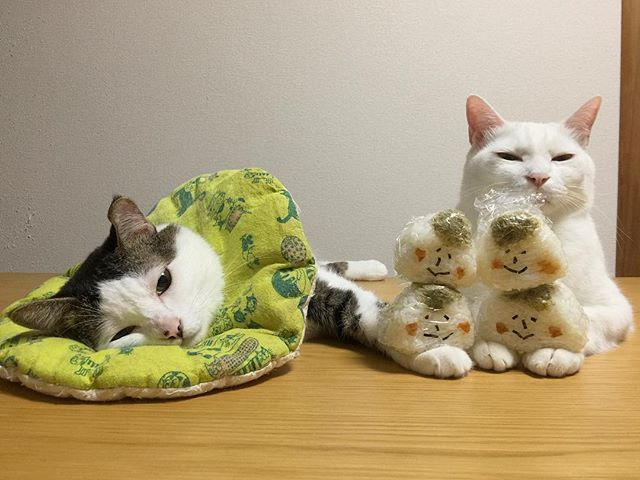 とろこぶ夫兄弟☺︎☺︎☺︎☺︎❤︎ 今日もお母はんのワガママに付き合って、いっぱい頑張ってくれたお2人さん♩ 訳ありのお腹いっぱいで、とろこぶ夫兄弟は食べれんかったから明日の朝ごはん。 今日も1日お疲れ様〜☆☆☆ #onigiriaction  #八おこめ #ねこ部 #cat #ねこ #おにぎり #のせ猫