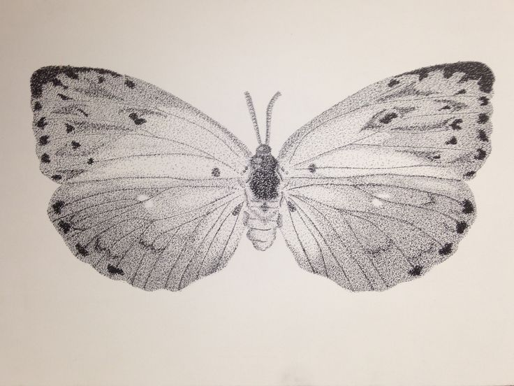 mariposa, puntillismo, blanco y negro, diseño, insecto