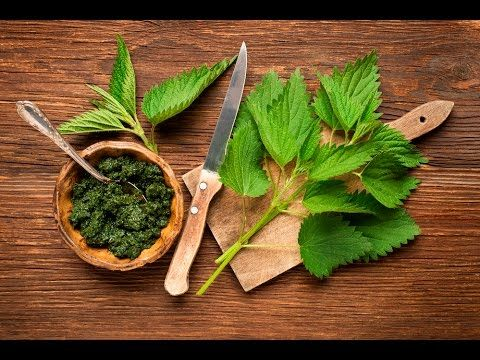 5 Secrets of Nettle. Beneficial features. Nettles and magic