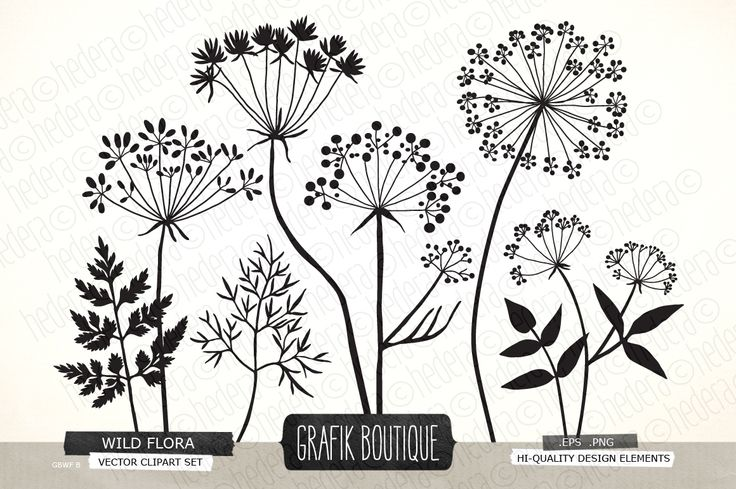 Wild Herbs Flowers silhouette vector by GrafikBoutique on Creative Market